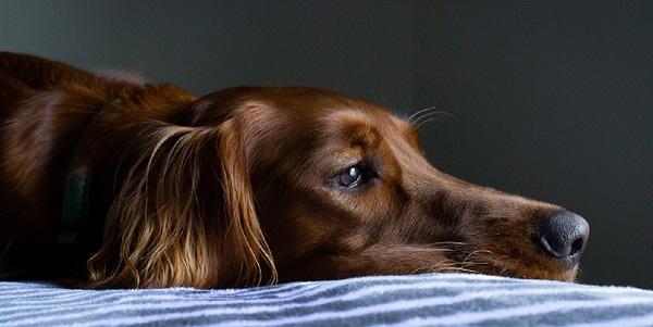 Animals that grieve